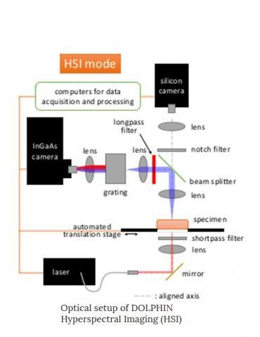 Des sondes qui ciblent et marquent par fluorescence des cellules cancéreuses spécifiques