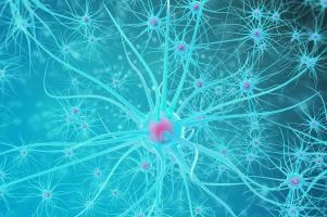 De nouveaux capteurs de dopamine pourrait permettre de percer les mystères de la chimie cérébrale avec une technique d'imagerie de « nouvelle génération » (Visuel Adobe Stock 114519500)