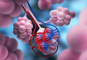 Chez les personnes atteintes de fibrose pulmonaire, les oscillations d'horloge s'étendent jusqu'aux petits espaces aériens, appelés alvéoles.