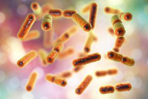 Akkermansia muciniphila peut également générer un large éventail d'autres avantages pour la santé (Adobe Stock 193009954)