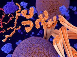 C'est l'espoir d'une molécule très sélective à la fois au niveau de l'ARN et au niveau de l'α-synucléine