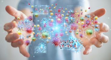 Les microbes intestinaux pourraient révéler le secret d'un vieillissement en bonne santé (Visuel Adobe Stock 234842482)