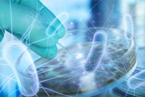 Cette étude ouvre 2 deux pistes, celle de l'usage de probiotiques contre des pathogènes de la même espèce et l'usage les organoïdes, plutôt que des souris, pour observer et tester (AdobeStock_264453792)