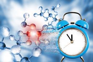 Les régimes riches en graisses « cassent l'horloge biologique », ce qui pourrait être une cause sous-jacente de l'obésité (Visuel Adobe Stock 308086464)