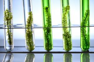 Un composé marin, extrait de l'algue de la mer Baltique Fucus vesiculosus, promet des bénéfices anticancéreux et anti-infectieux (Visuel AdobeStock_284898947)