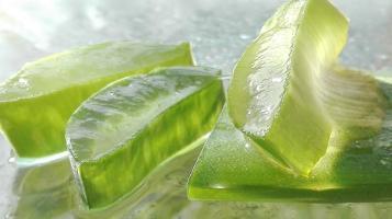 Connu pour ses incroyables propriétés, l'aloe vera est une plante dont les vertus se révèlent aussi multiples que diverses.