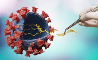 L'édition du génome délivre une enzyme tueuse de code génétique au coronavirus pour l'empêcher de se répliquer (Visuel Adobestock_330686823_1)