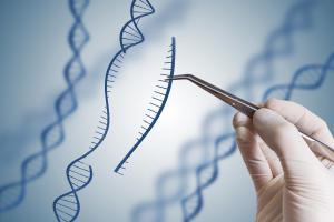 La découverte d'une caractéristique clé de la biologie du glioblastome mésenchymateux pourra peut-être se traduire par un nouveau traitement à moyen terme, basé sur l'édition de gènes (Visuel Adobe Stock 172051468).
