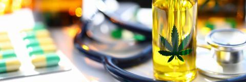 Une consommation accrue de cannabis pourrait-elle entraîner une incapacité à produire une réponse appropriée au stress indispensable à notre « survie » ? (Visuel 297152964)