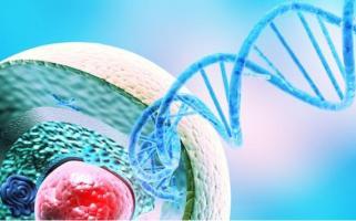 """Les enzymes """"TET"""" maintiennent nos cellules immunitaires sur « la bonne voie » (Visuel La Jolla Institute for Immunology)"""