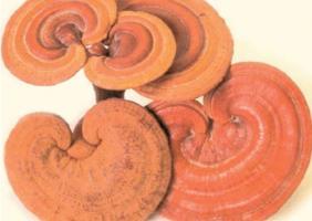 L'acide ganodérique extrait de Ganoderma lucidum, un champignon oriental , démontre ici son efficacité dans le traitement des affections cutanées telles que la dermatite atopique (Visuel NIH)