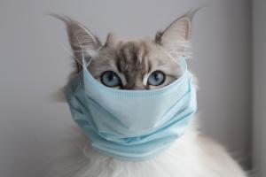 Si vous êtes COVID-19 positif, vous devez limiter les interactions avec vos animaux de compagnie pour les protéger de l'exposition au virus (Visuel AdobeStock_336196621)