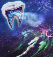L'extraction des dents de sagesse pourrait permettre une  une « libération » des nerfs qui alimentent les papilles gustatives à l'arrière de la bouche (Visuel Fotolia)