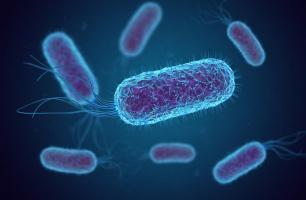 Une bactérie spécifique influence le comportement des animaux, et en particulier leur instinct maternel (Visuel fusebulb)