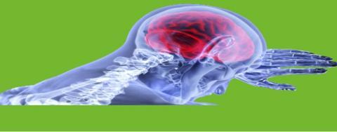Première démonstration d'efficacité de la stimulation ultrasonore pulsée de faible intensité non invasive pour le traitement de l'épilepsie (Visuel Chinese Academy of Sciences)