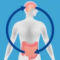 Le lien entre notre intestin ou plutôt notre flore intestinale et notre cerveau est de mieux en mieux documenté : on l'appelle l'axe microbiote-intestin-cerveau