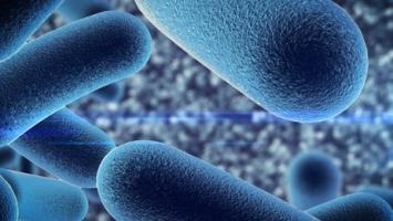 Les bactéries commensales aident à réguler notre métabolisme en coordination avec les voies immunitaires innées