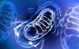 2 nouvelles molécules ouvrent l'espoir de pouvoir ralentir les changements moléculaires, normaux et pathologiques, associés au vieillissement.