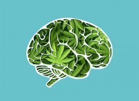 Les études sont toutes unanimes à reconnaître les dangers de la consommation de cannabis pour le cerveau encore en développement de l'adolescent.
