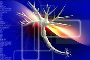 La dynamique cérébrale est aussi liée à la force dentritique