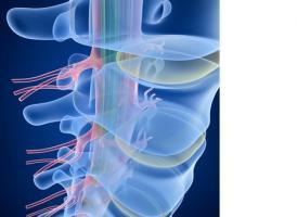 La stimulation des ganglions de la racine dorsale permet de « perturber » les signaux de douleur en ciblant spécifiquement les nerfs responsables.