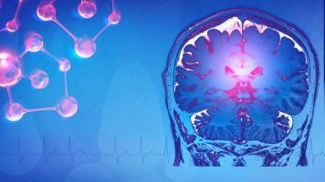 Une fonction de l'aromatase dans le cerveau adulte jusque-là inconnue sur la libido vient d'être découverte (Visuel AdobeStock_242228542)