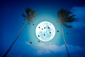 La relation présumée entre le crime et la pleine lune est bien...un mythe