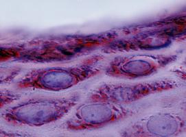 Les cellules se déplacent et les conséquences de leurs mouvements ont des implications cruciales pour notre santé (Visuel Adobe Stock 157180144)
