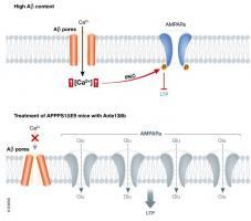 Cette petite molécule, appelée anle138b, semble eCette petite molécule réduit la perte de mémoire en bloquant directement les fuites des membranes nerveuses