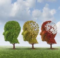 Dans  l'Alzheimer, la perte de capacités cognitives se produit exactement à l'inverse de la séquence d'acquisition des compétences au cours du développement normal.