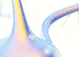 Dans le cerveau, les vaisseaux sanguins sont entourés par des cellules appelées astrocytes (Visuel du haut). Ces cellules ont des prolongations qui entourent les artères et les veines tel « un réseau de tuyauterie » (Visuel Adobe Stock 121451850)