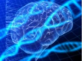 L'autisme associé à moins de biais cognitif dans la prise de décision, qu'en population générale