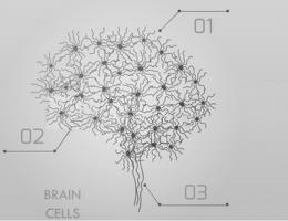Cette approche globale de l'ensemble des connexions du cerveau permet non seulement de comprendre comment fonctionnent des systèmes spécifiques (ex : système visuel, système moteur…), mais aussi comment fonctionnent des systèmes cognitifs
