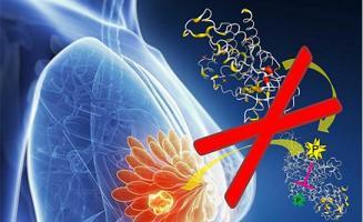 Un traitement combinant un médicament ciblant FGFR4 et un médicament ciblant HER2 réduit efficacement la viabilité des cellules cancéreuses du sein.