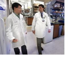 L'étude confirme le rôle clé du microbiote intestinal dans la réponse immunitaire.
