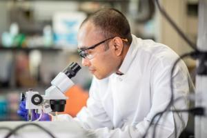 Découverte d'une interaction cruciale entre le sang et le cancer de l'ovaire (Visuel Université du Texas)