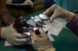 Un réseau mondial de surveillance de la faune sauvage pour détecter les virus émergents avant transmission à l'Homme (Visuel Ishaan Raghunandan)