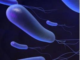 La bactérie Helicobacter pylori peut provoquer chez la personne infectée une gastrite chronique à vie, l'ulcère de l'estomac et du duodénum et le cancer gastrique.