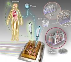 Cette plateforme de diagnostic, à l'échelle d'une puce comporte, en l'état actuel, les tissus artificiels de 10 organes, reliés entre eux
