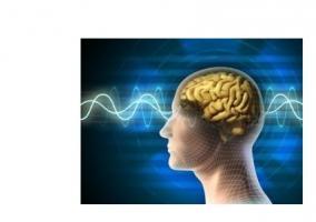 Les personnes atteintes de schizophrénie ont des hippocampes « hyperactifs », qui favorisent ces symptômes intrusifs d'hallucinations.