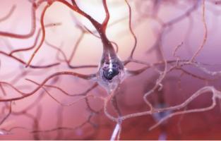 Quand un neurone déclenche un pic ou décharge, cette impulsion électrique atteint les neurones voisins qui déclenchent à leur tour les grondements ou roulements de tambour jusqu'à émettre à leur tour une décharge.