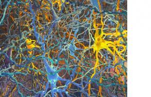 Jusque-là,  il n'existait pas de classification des différents types de neurones.
