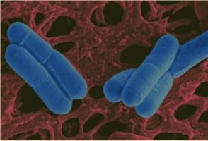 Bientôt des yaourts aux probiotiques antihypertenseurs ?