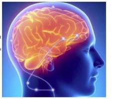 Une stimulation électrique de faible intensité dans une zone spécifique du cerveau peut améliorer la mémoire verbale à court terme