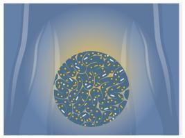 Les « bonnes » bactéries de cette formulation liquide atteignent et colonisent l'intestin avec succès, modifient de manière bénéfique la flore intestinale et la réponse immunitaire.