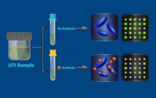 Le test fonctionne selon le principe selon lequel les bactéries typiques reproduiront moins bien leur ADN dans une solution antibiotique sauf si les bactéries en question sont résistantes à l'antibiotique.