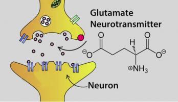 Des structures nerveuses endommagées signifient que des charges de glutamate s'infiltrent dans des espaces extérieurs aux cellules, les excitant et les endommageant.
