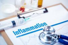 ce nouveau modèle permet aux chercheurs d'étudier l'efficacité des médicaments durant chacune des 2 phases de l'inflammation