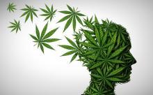 """Le cannabidiol (CBD) et """"l'autre cannabinoïde"""" non psychotrope, dont les bienfaits pour la santé sont aujourd'hui bien documentés (Visuel 1ereplace)"""
