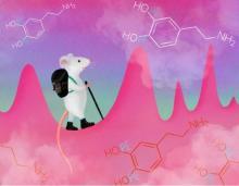 Il ne s'agit pas ici de canaliser ce messager chimique du bien-être, la dopamine, produite en cas de plaisir ou de satisfaction liée à l'atteinte d'un objectif ou d'une récompense, mais de contrôler de petites impulsions de dopamine, imprévisibles, qui jaillissent fréquemment mais de manière aléatoire dans notre cerveau (Visuel Julia Kuhl).